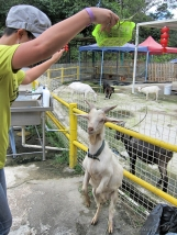 And dancing with a goat